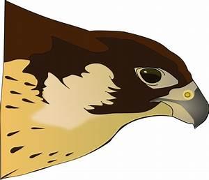 Clipart - Halcón-Hawk