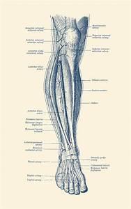 Leg Diagram