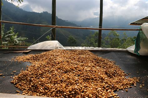 What is a honey processed coffee? Honey-Processed Coffees: Quiet Adventure - Coffee Review