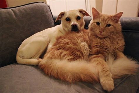 cats dogs than better why dog facts cat pets controversial