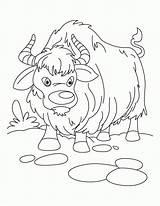 Yak Coloring Sheet Ox Cartoon Kolorowanki Sheets Ludinet Jak Vbs Yaks Kolorowanka Animaux Clipart Printable Noel Druku Comments Yawning Growling sketch template