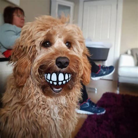 Teeth Ball The Funniest Dog Toy Ever