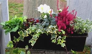 Winterharte Pflanzen Für Balkonkästen : bepflanzter blumenkasten 60 cm wintergr n mit schneerose pflanzen versand f r die besten ~ Orissabook.com Haus und Dekorationen