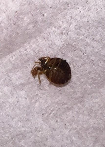 Bed Bugs Nyc by New York City Ny Bed Bug Hotel And Apartment Reports