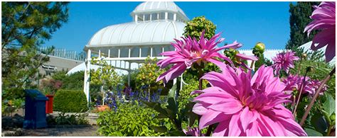 flower show at phipps conservatory and botanical