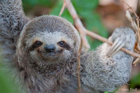 Sloth Images Best 13 Reasons Why Memes Jokes Thrillist