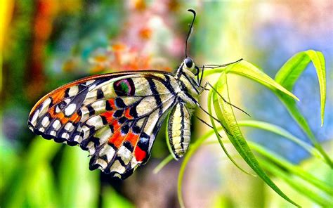 55 Colorful 【butterfly】hd Free Images Wallpapers Download