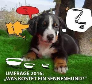 Was Kostet Ein Induktionsherd : was kostet ein sennenhund eure erfahrung 2016 gretes sennenhunde blog ~ Michelbontemps.com Haus und Dekorationen