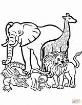 Zoo Coloring Animals Pages Entitlementtrap sketch template