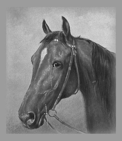 Realistic Horse Drawing Ideas