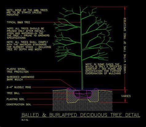 cad details deciduous tree detail cad design