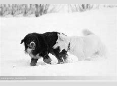 Hundefotos Hunde im Schnee Winterspaziergang