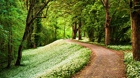 Nature Green Path In Forest Hd Wallpaper Stylishhdwallpapers