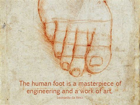 The intrinsic foot muscles comprise four layers of small muscles that have both their origin and insertion attachments within the foot. Each foot is made up of 26 bones, 33 joints, 107 ligaments ...