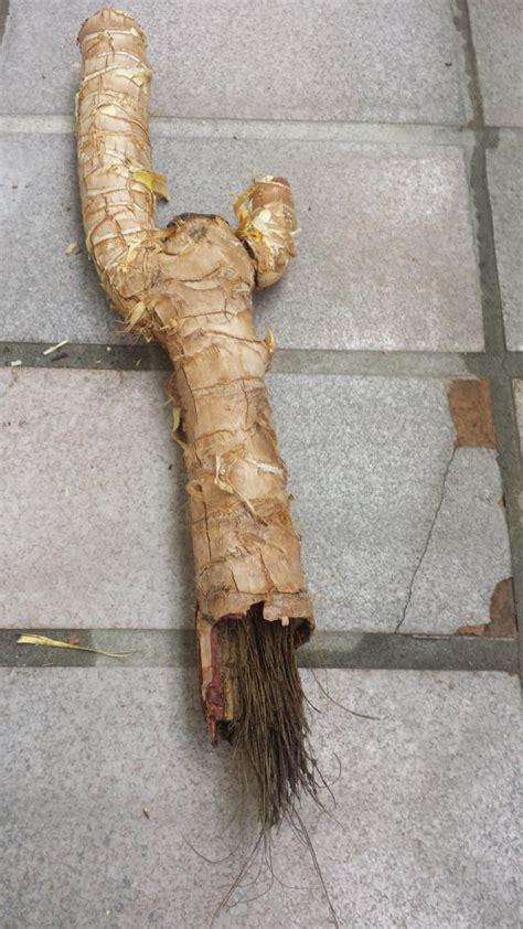 hortensien welche erde