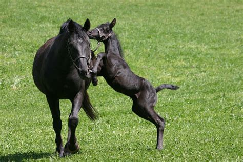 horse horses energetic animals young