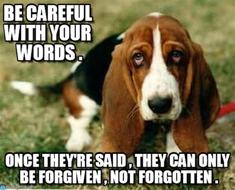 Sad Dog Meme - sad dog memes image memes at relatably com