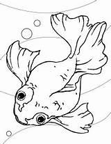 Goldfish Coloring Printable Coloringme sketch template