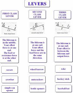 Types Of Levers Worksheet - The Best and Most ...