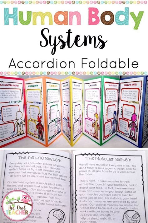 human body systems activity foldable booklet printable