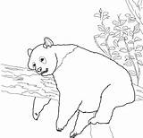 Panda Coloring Pages Giant Printable Colouring Sleepy Popular sketch template