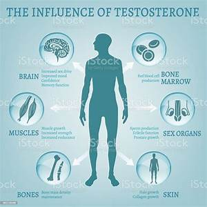 Testosterone Effects Infographics Stock Illustration - Download Image Now