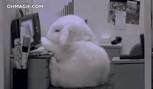 Cute rabbit falling asleep - Funny Gifs and Animated Gifs