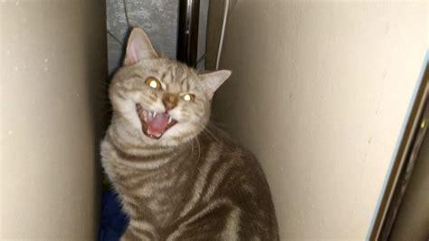 Young cat attacks older cat