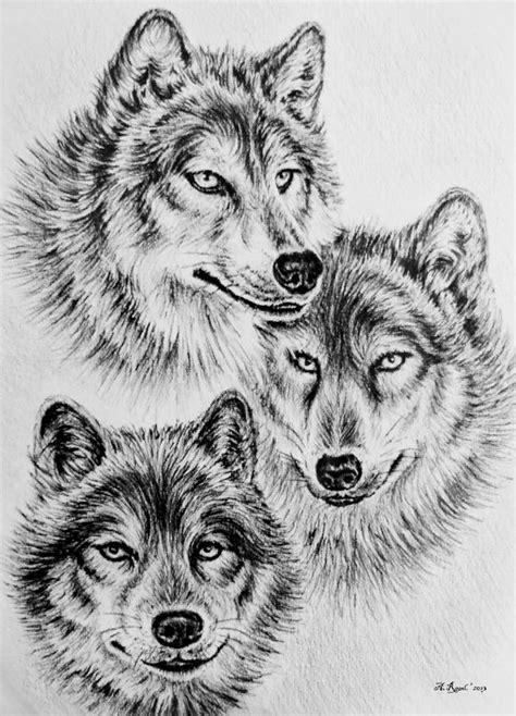 wolves drawings   clip art  clip