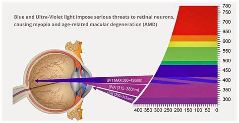 blue light macular degeneration what is blue light and why do i need protection from it