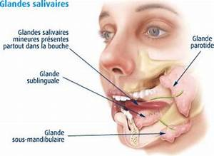 Definition  U0026gt  Salivary Gland