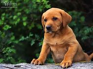Cute Dogs Pictures Puppies
