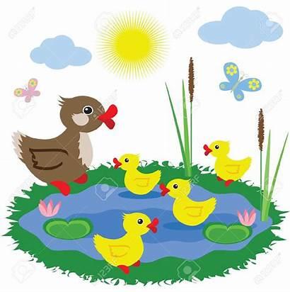 Pond Ducks Clipart Vector Duck Clip Illustrations