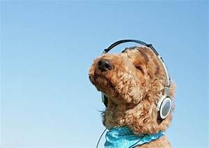 How To Make A Playlist Your Dog Can Enjoy When You're Not ...