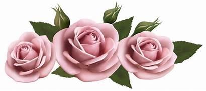 Transparent Roses Clipart Rose Flowers Yopriceville Clip