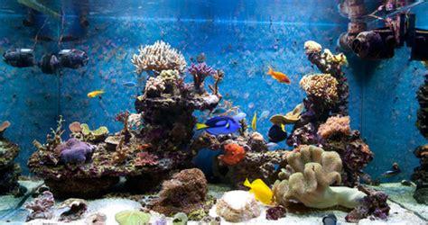 aquarium eau de mer froide