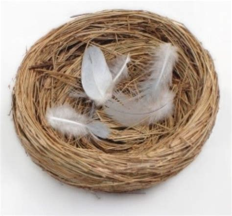 Nest Syndrom by 1000 Ideas About Empty Nest On