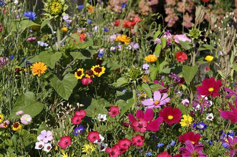 Der Blühende Garten by Der Bienenfreundliche Garten Mein Eigenheim
