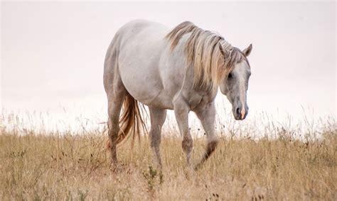 horses horse long cowgirlmagazine pixabay