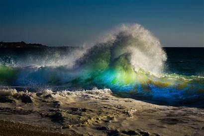 Beach Wave Sea Sky Dog Spray Wallpapers