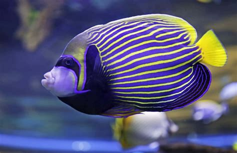 types  fish  popular saltwater  freshwater fish