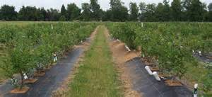 Watch Nursery University by Organic Blueberry Production Research Project Extension