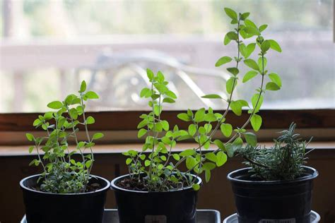 Start An Indoor Vegetable Garden This Winter