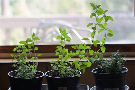 Start An Indoor Vegetable Garden This Winter Treehugger