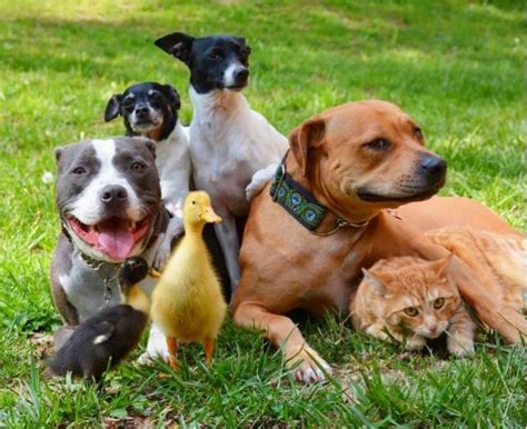 dog family    adorable youll   day