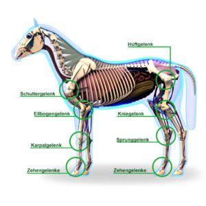 gelenke anatomie krankheitsursachen und vorbeugung