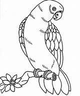 Coloring Parrot Pages Printable Bird Macaw Parrots Getcoloringpages Adult sketch template