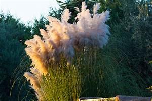 Große Pflanzkübel Richtig Befüllen : pampasgras im k bel ziehen so pflegen sie es richtig ~ Buech-reservation.com Haus und Dekorationen