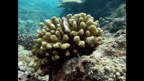 Scuba Diving Turtle Canyon Reef, Hawaii