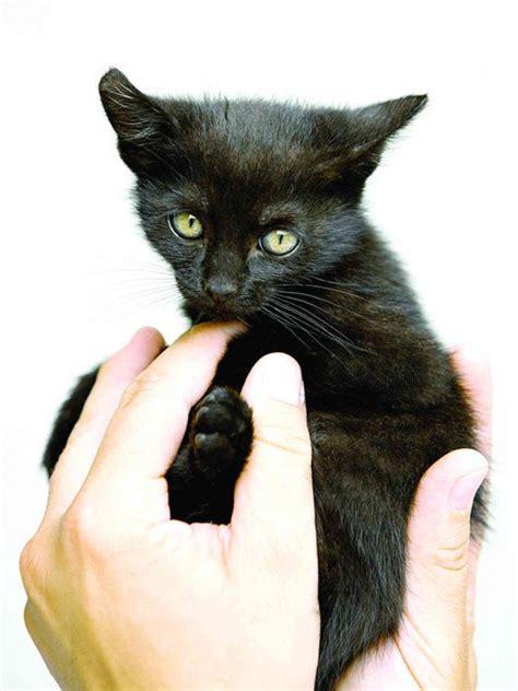Kočky a paraziti   iFauna.cz